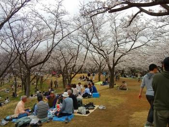 1桜山 (640x480).jpg